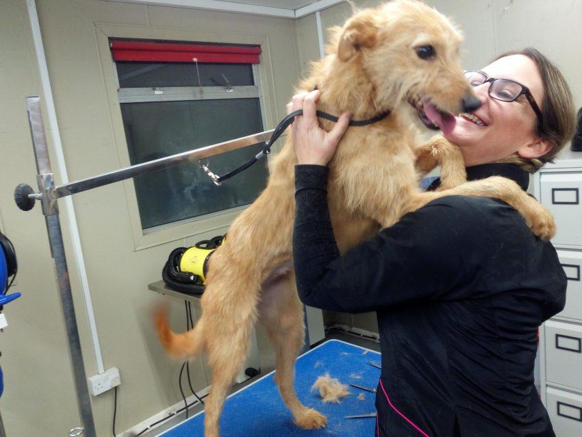 Dog Grooming Class Week 4 Nightschool Ie Blog